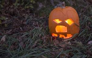 Politiet søger vidner til halloween-hærværk