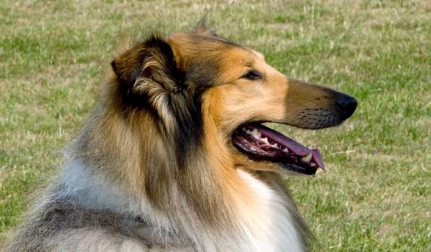 Hundepark skal udvides
