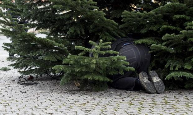 Har du et stort juletræ stående?