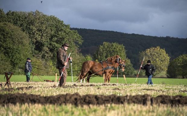 Bent er bornholmsmester i pløjning: Hestene skal ned i gear
